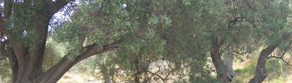 testata-olive